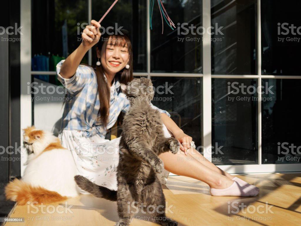 Chinese young girl play with several cats at home in sunny afternoon, focused on cat, happy pets lifestyle. stock photo
