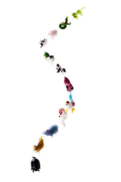 Chinese zodiac trajet - Photo