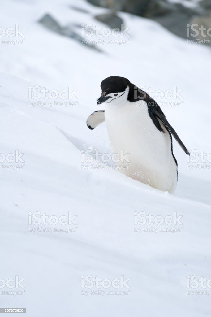Kinnriemen im Schnee – Foto