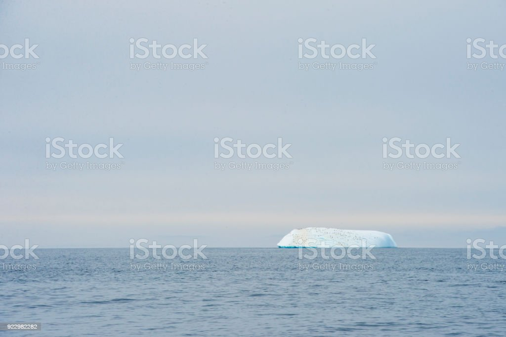 Chinstrap penguin at the top stock photo