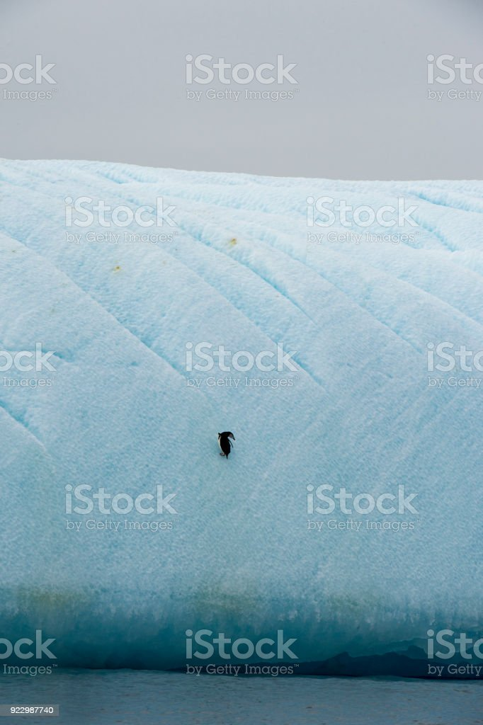 Chinstrap Penguin in Anatcrtica. Life, cold. stock photo