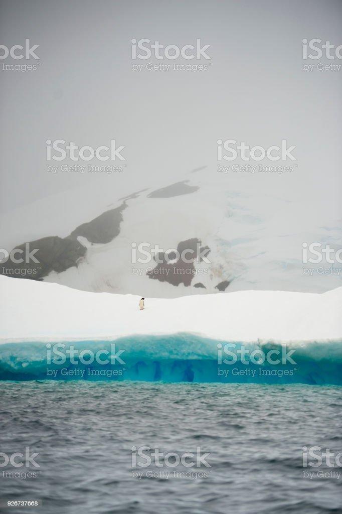 Chinstrap penguins on ice, Antarctica stock photo