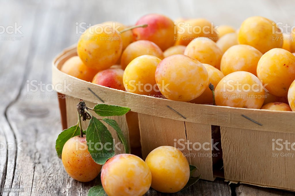 Chip basket full of fresh small yellow plums (mirabelles) stock photo
