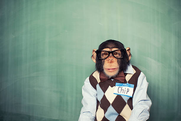 chip the chimp - ape stock pictures, royalty-free photos & images