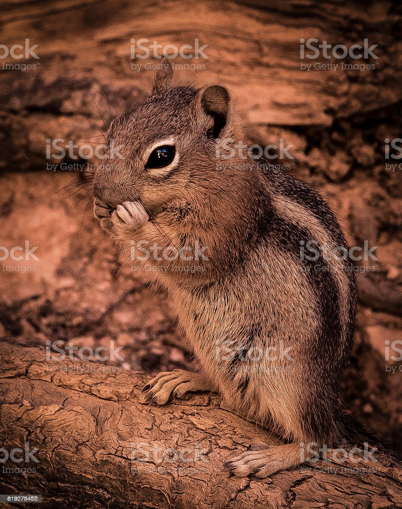 Chipmonk on Log stock photo