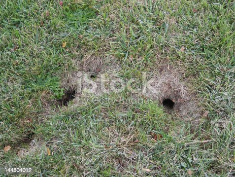 chipmunk burrow holes stock photo more pictures of animal den istock. Black Bedroom Furniture Sets. Home Design Ideas