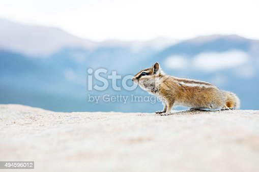 A chipmunk looking for a handout in the Rocky Mountain National Park, Colorado. Plenty of copy space and resolution for cropping.