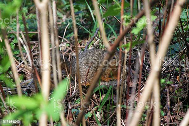 Photo of chipmunk hiding in woods background