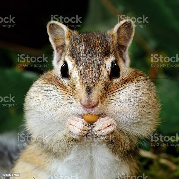 Photo of Chipmunk in forest