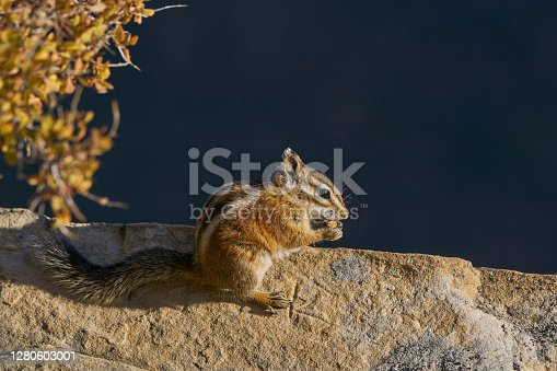 Chipmunk in the breathtakingly beautiful scenery of Zion National Park in southern Utah.