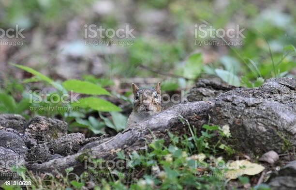 Photo of chipmunk look