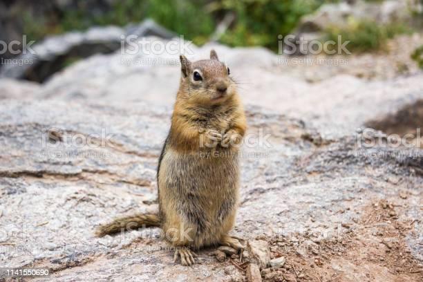 Photo of Chipmunk looking cute in Estes Park