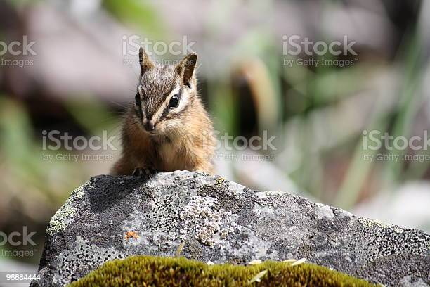 Photo of Chipmunk on a rock