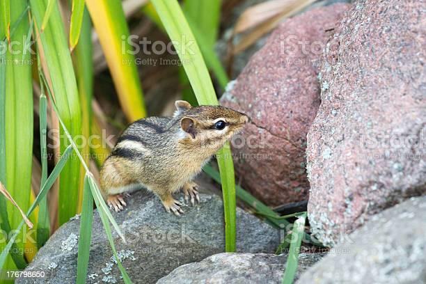 Photo of Chipmunk on the Rocks