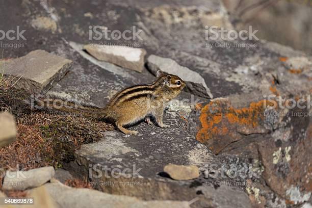 Photo of Chipmunk sitting on the rocks