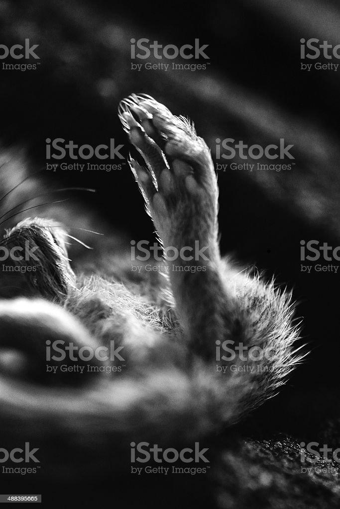 Chipmunk's paw stock photo