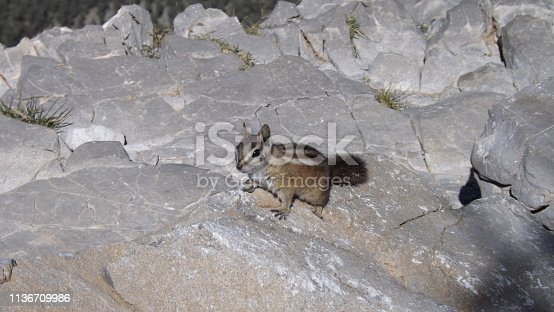 Chipmunk playing on the mountain