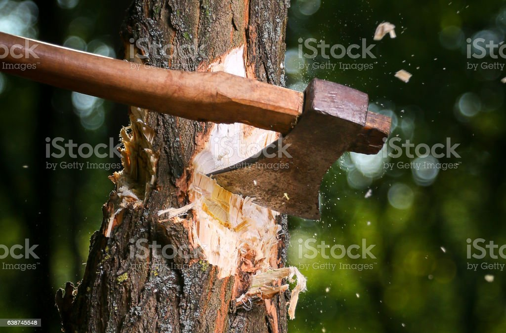 Chips fly apart after the lumberjack chopping wood – Foto