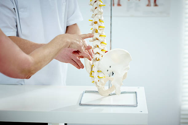 chiropractor explains patient using plastic model - chiropractic care stock photos and pictures