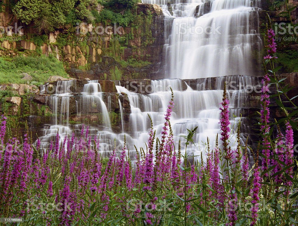 Chittenango Falls and Purple Strife stock photo
