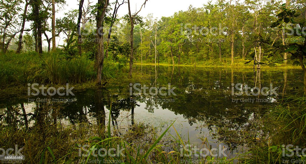 Chitwan A tropical rainforest stock photo