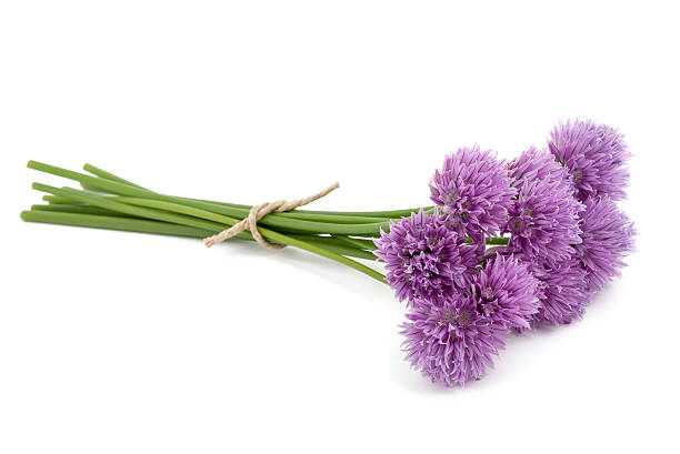 Chive  flowers foto