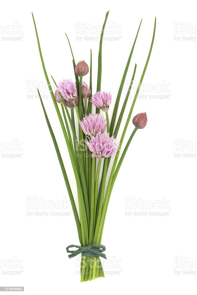 Chive Herb Flower Posy royalty-free stock photo