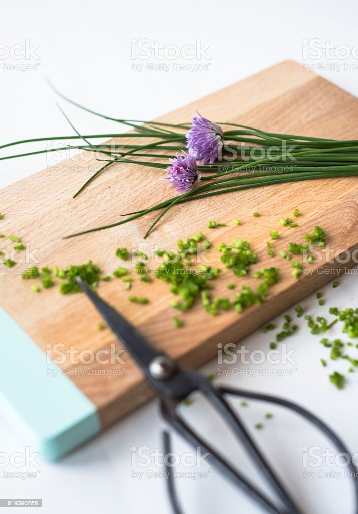 Chive with scissors stock photo