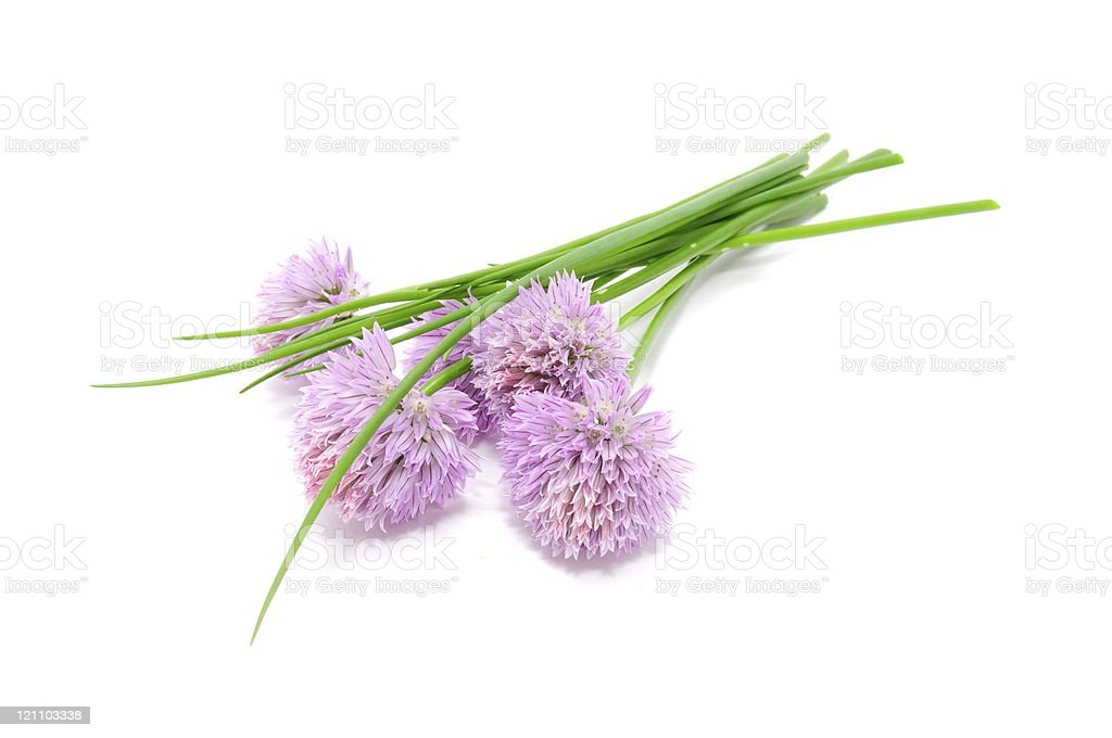 Chives and Chive Flowers stock photo