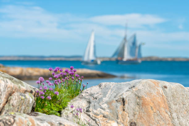 Chives and Sails