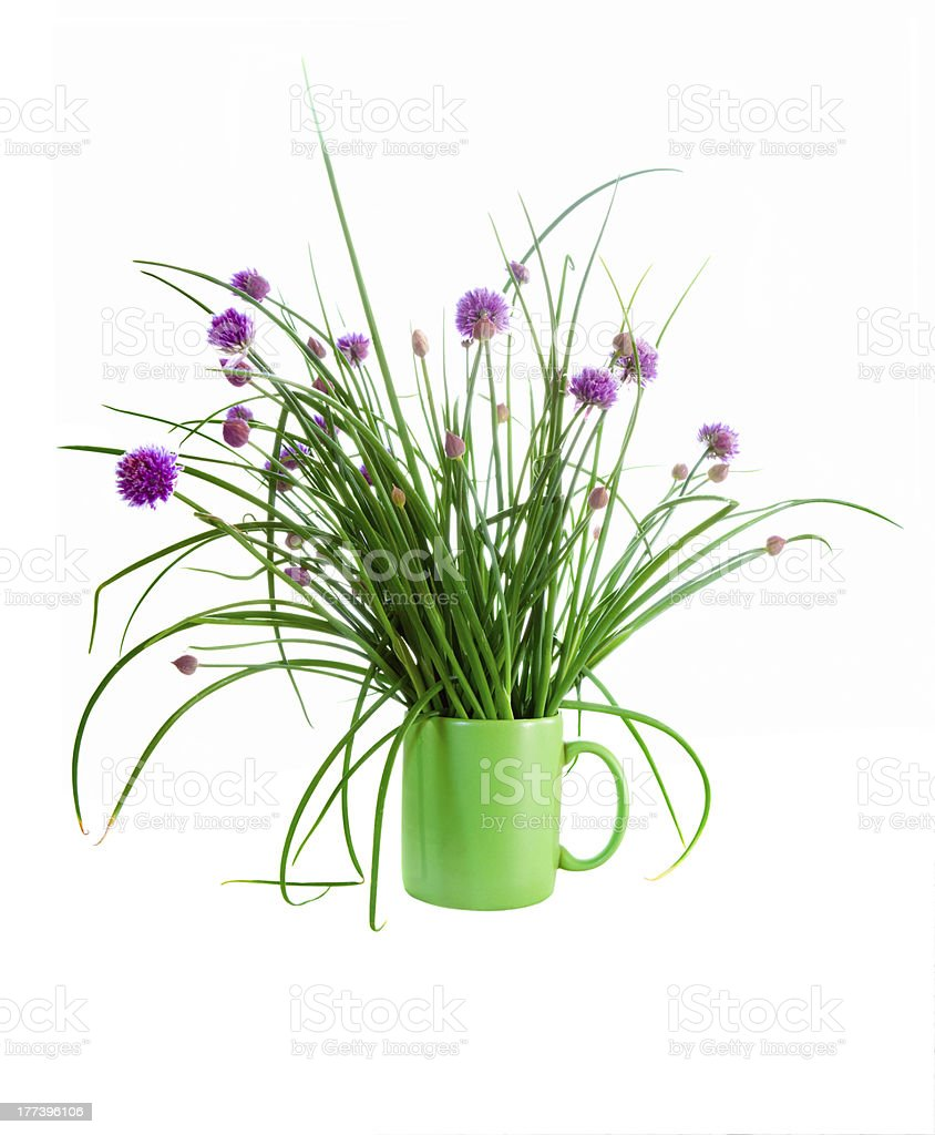 Chives isolated on white stock photo