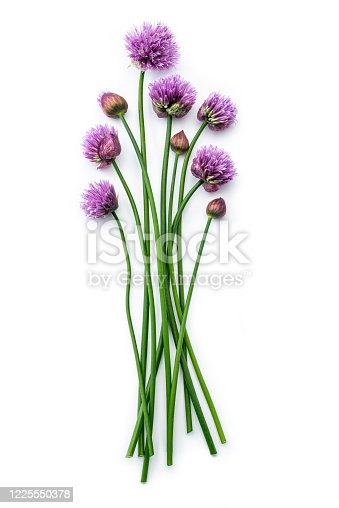 Chives with flowers isolated against white background (Allium schoenoprasum)