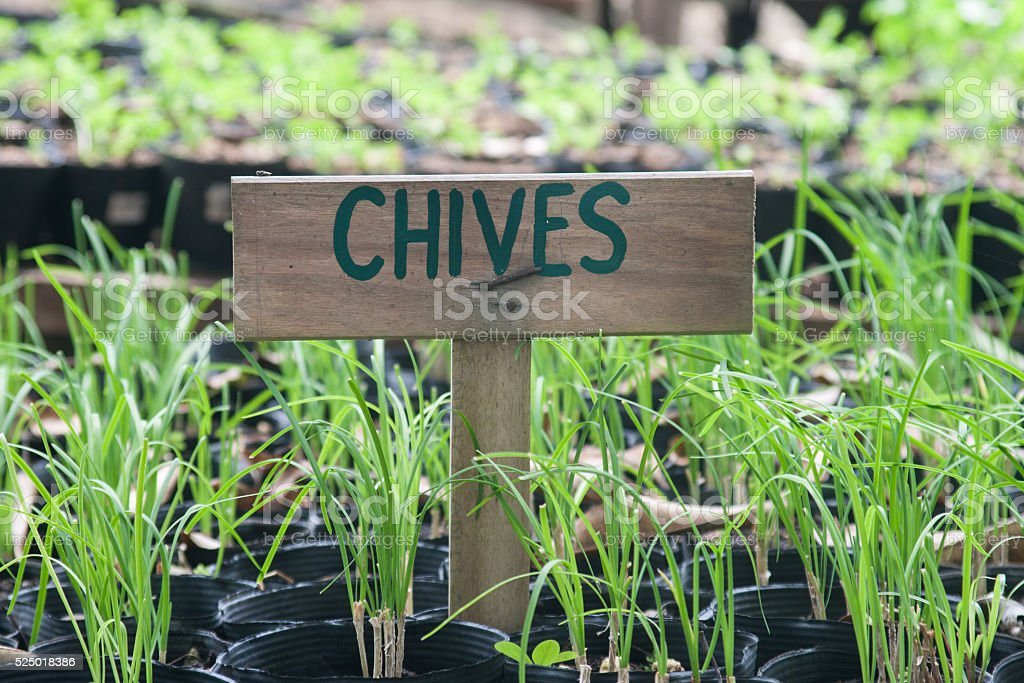 Chives sign stock photo