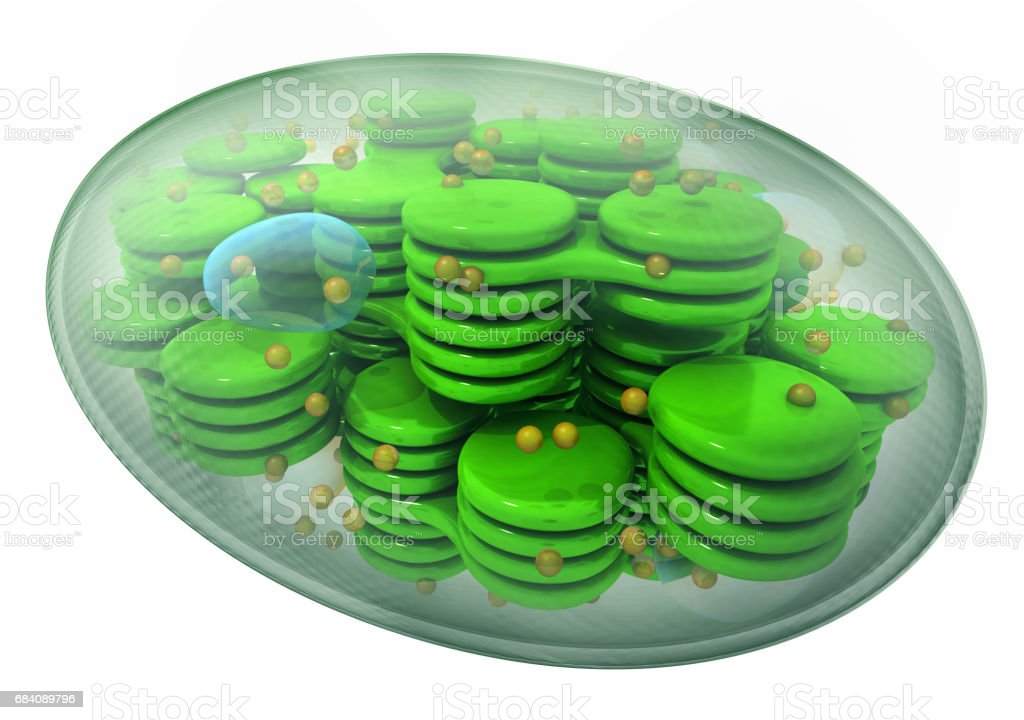 Chloroplast, plant cell organelle. stock photo