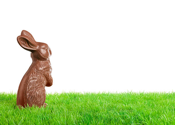 Chocolate easter bunny – Foto