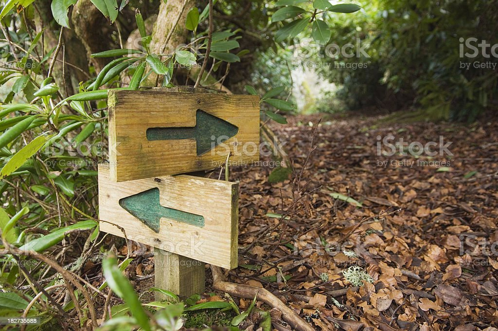 Choice of paths in woodland stock photo