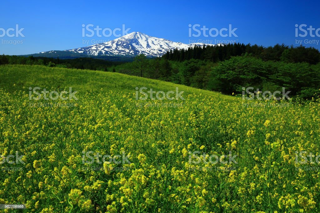 Campo Chokai e estupro - Foto de stock de Akita royalty-free