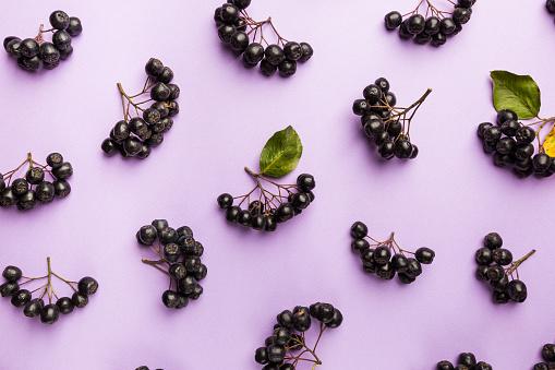 istock chokeberry, aronia berries. 1195756057