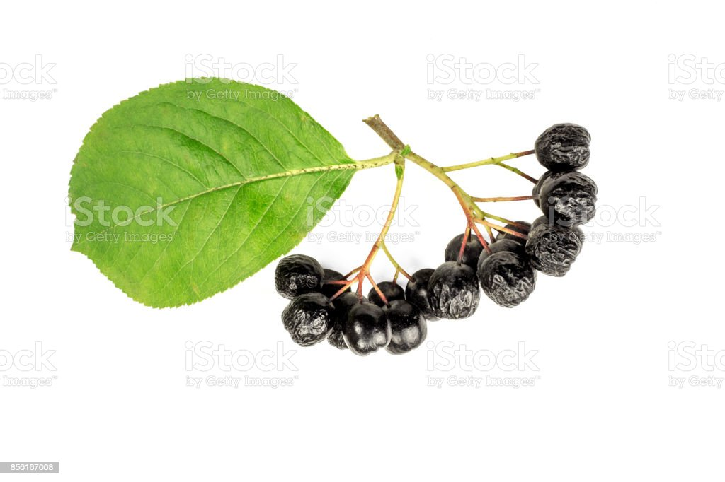 Chokeberry berries cut out on a white background stock photo