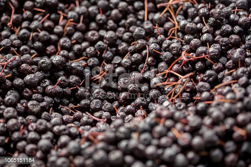 Abundance of Chokeberry fruit perfect for backgrounds.