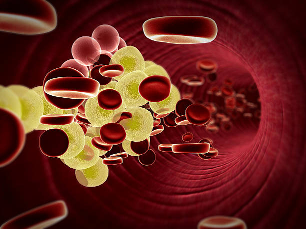 cholesterol in the blood stock photo