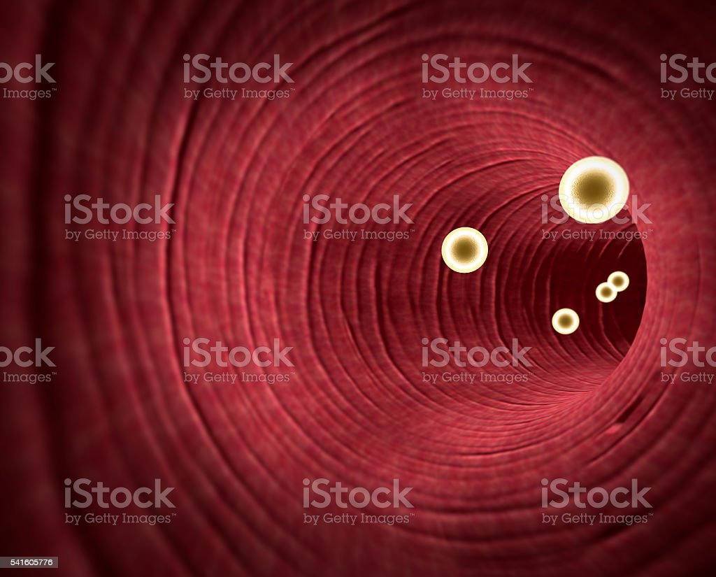 cholesterol in the blood vessels stock photo