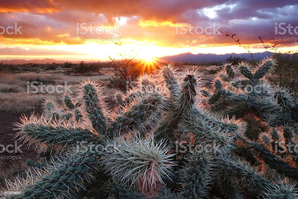 Cholla Desert Sunset stock photo