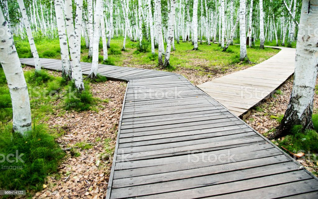 Choose your way in forest stock photo
