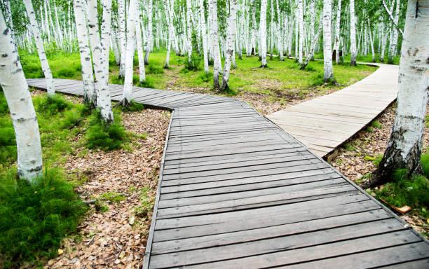Choisissez votre chemin dans la forêt - Photo