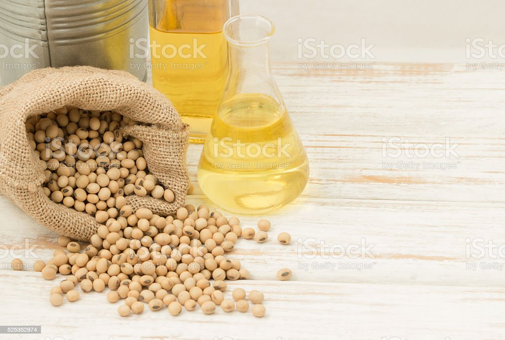 Choosing beans to care for the trial were soya oil stock photo