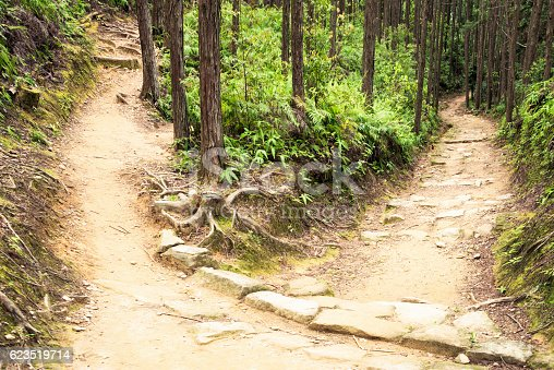 A fork in the forest path ahead, with two alternate routes available.