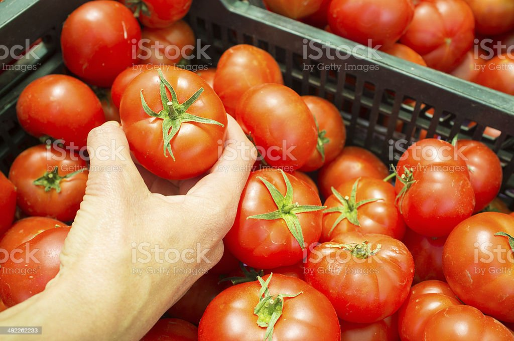 Choosing tomatoes stock photo