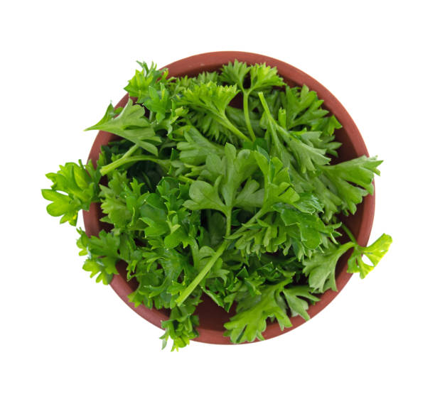 chopped curly parsley in a red clay bowl - parsley stock photos and pictures