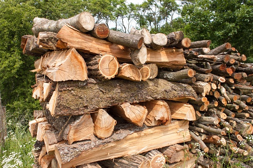 chopped firewood for the winter